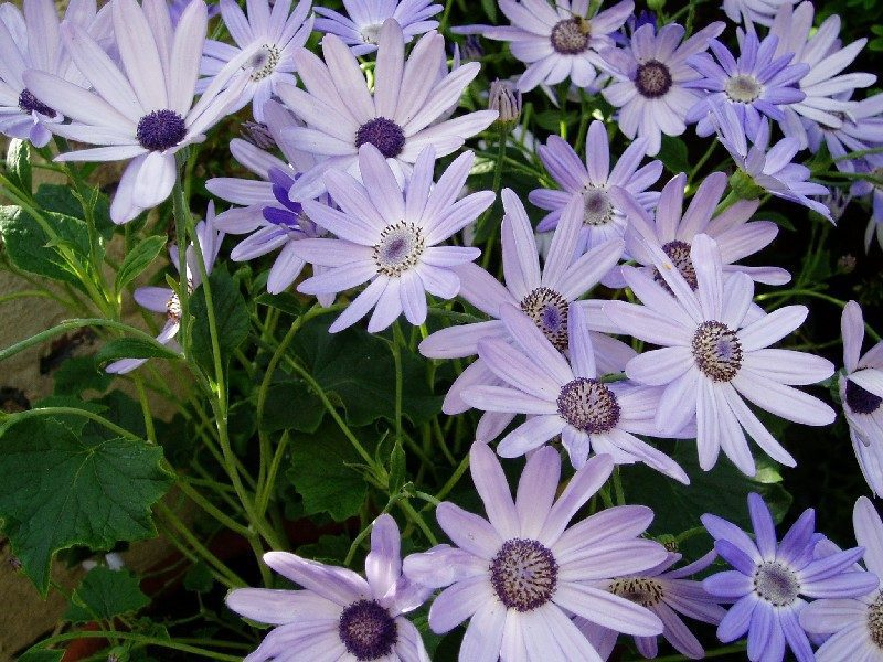 Purple Protection Flowers
